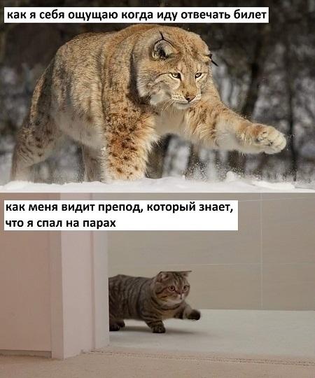 http://files.rsdn.org/187/WhatsApp%20Image%202021-02-16%20at%2023.06.48.jpeg
