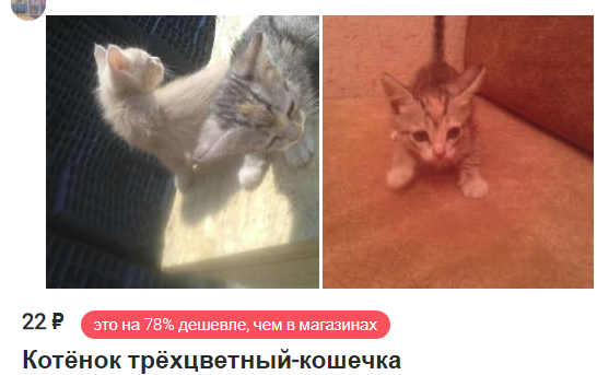 http://files.rsdn.org/187/cat-online.png